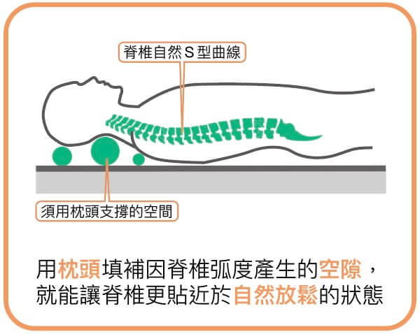用枕頭填補因脊椎弧度產生的空隙 就能讓脊椎更貼近於自然放鬆的狀態